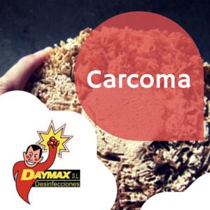 Eliminar carcoma en muebles y vigas de madera desinfecciones daymax - Carcoma en los muebles ...